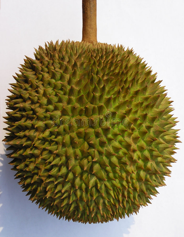 Download Durian fruit stock image. Image of durian, exotic, edges - 10505