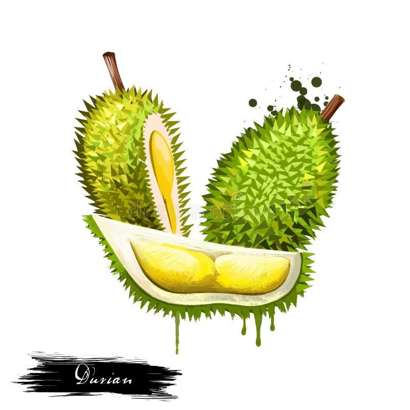 Art Durian Stock Illustrations 476 Art Durian Stock