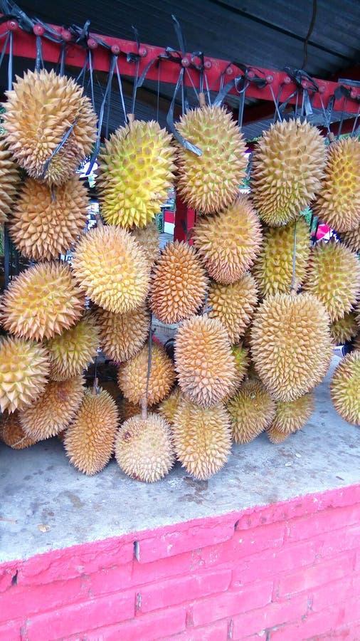 Durian Fruit stock image