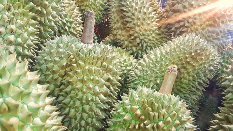 Durian fruit sold in the market in Thailand stock image