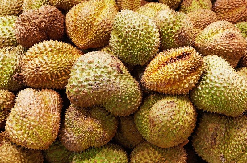 Download Durian fruits background stock image. Image of prickle - 22760597