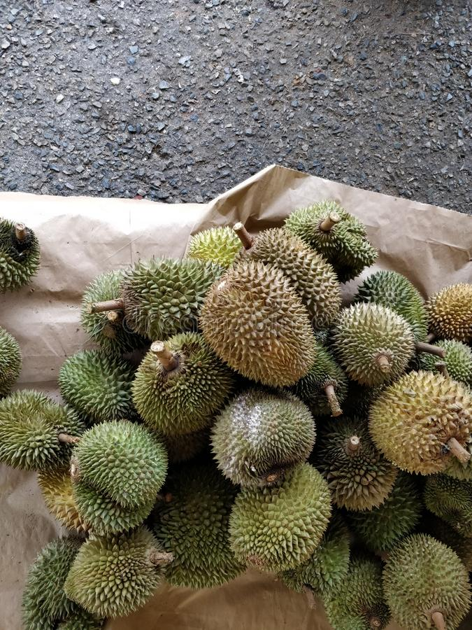 Durian fruits royalty free stock image
