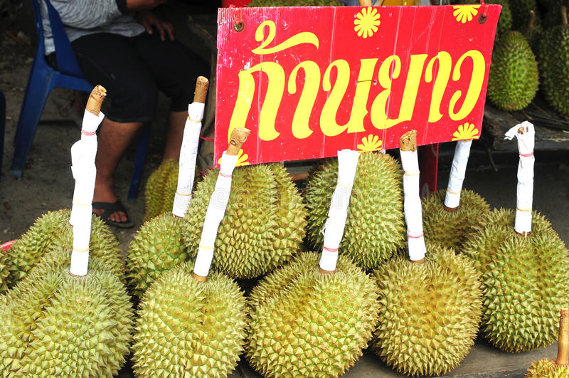 Durian fruits in Thailand royalty free stock photo