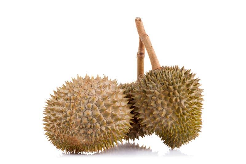 Download Durian Isolato Su Priorità Bassa Bianca Immagine Stock - Immagine di organico, nutrizione: 56877151