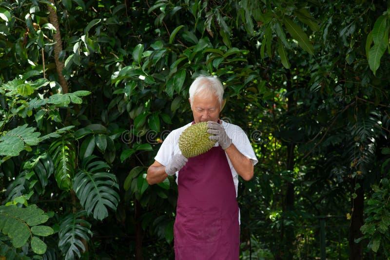 Durian landbouwer en musang koning stock afbeelding