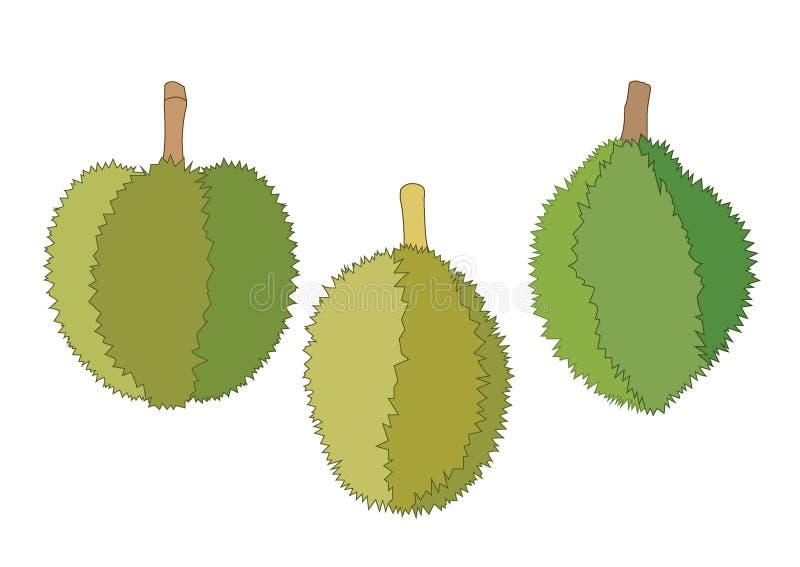 Durian maduro do durian verde e cru da cor do fruto do Durian ilustração do vetor