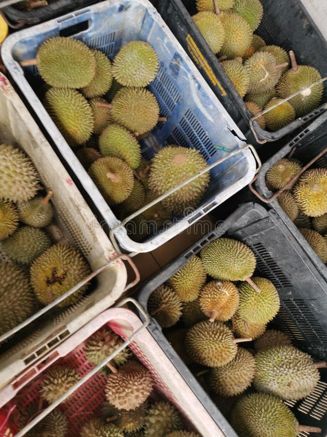 Durian in Malaysia royalty free stock photography