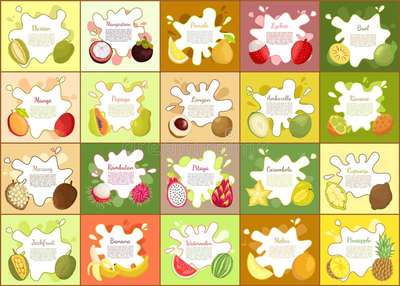 Durian, and Mangosteen Pomelo Vector Illustration. Durian, and mangosteen, pomelo and papaya set of posters. Citron and mango, carambola a and watermelon vector illustration