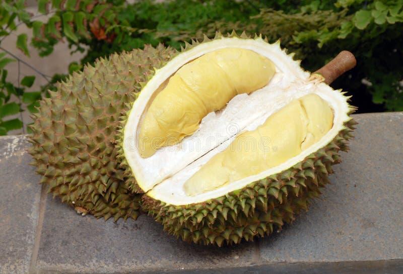 Durian o rei do fruto tropical imagens de stock