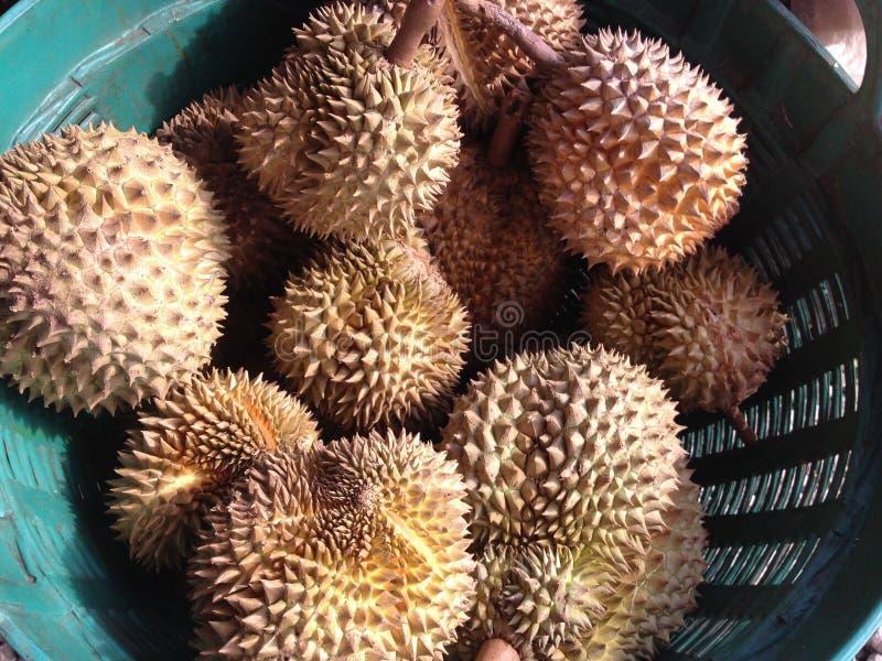durian owoc odosobniona fotografia tropikalna zdjęcia royalty free