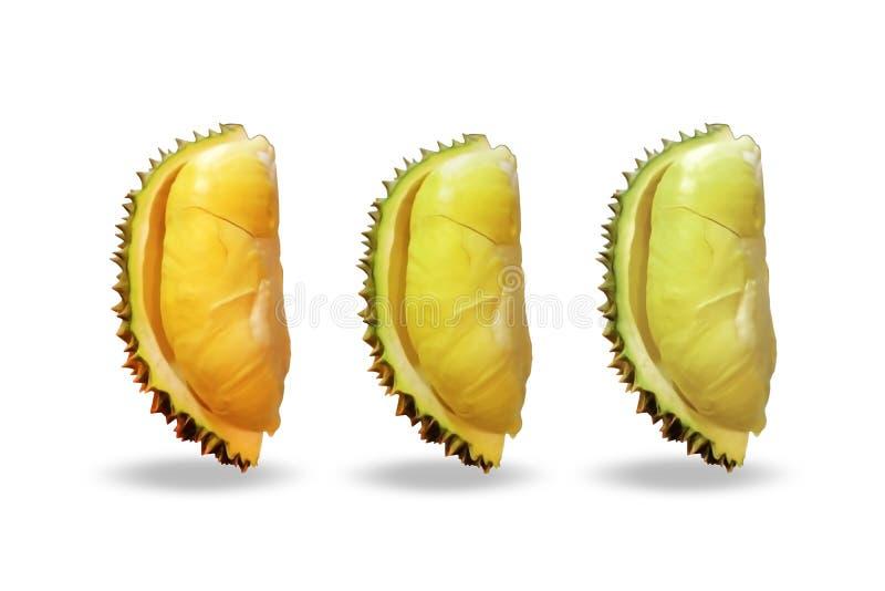 Durian réglé sur le fond blanc photographie stock libre de droits