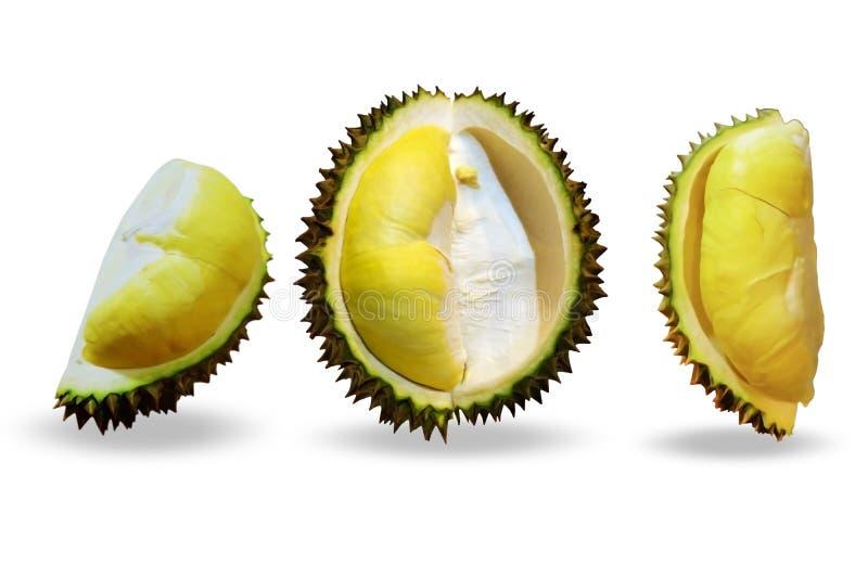 Durian réglé sur le fond blanc images libres de droits