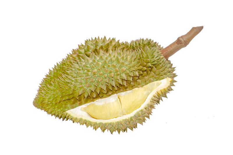Durian riped and fresh ,durian peel with yellow colour on white background,Tropical fruit.  royalty free stock image