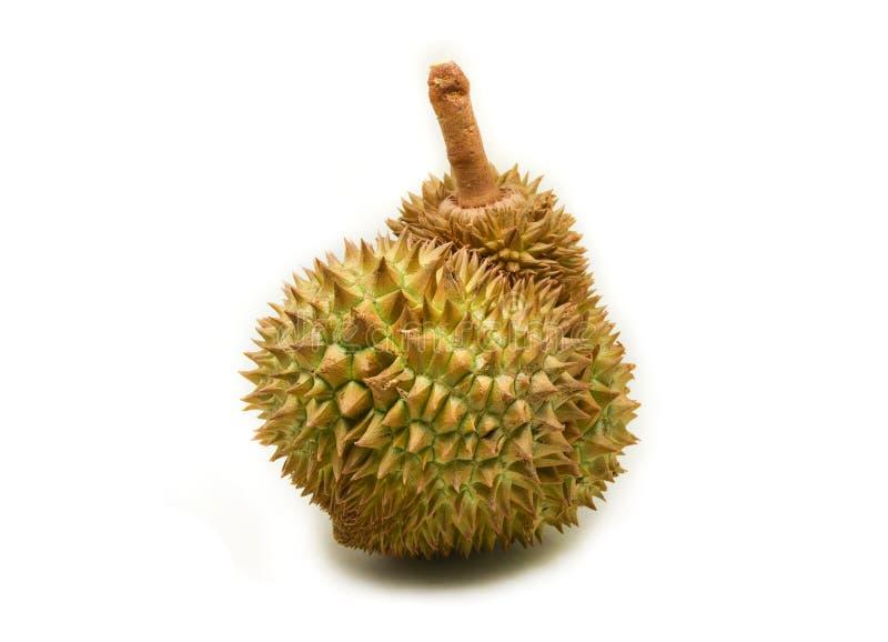 Durian sur le blanc images libres de droits