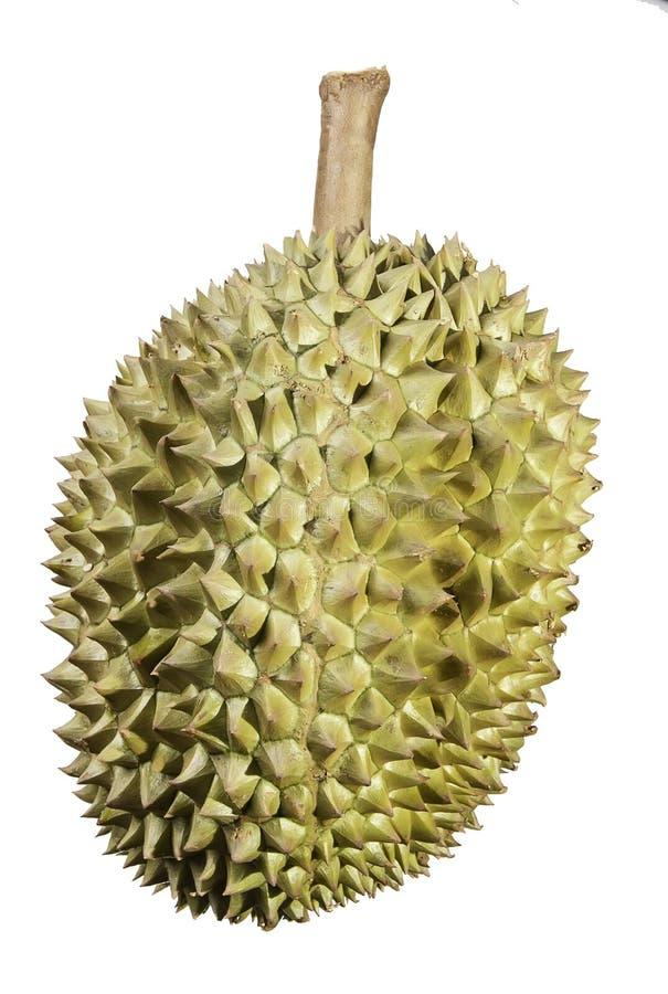 Durian sur un fond blanc images libres de droits