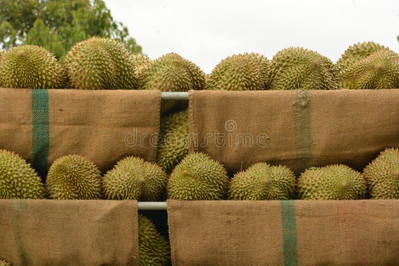 Durian van Thailand royalty-vrije stock afbeelding