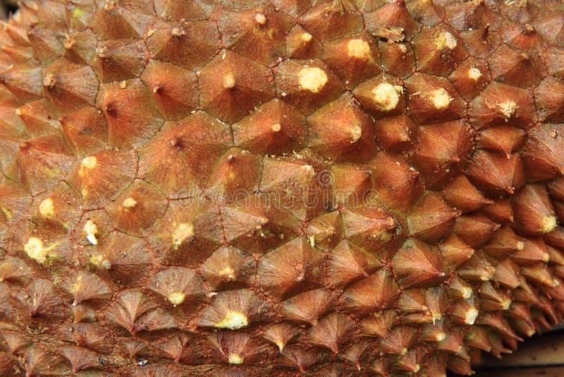 Durianfruchtbeschaffenheit lizenzfreies stockfoto