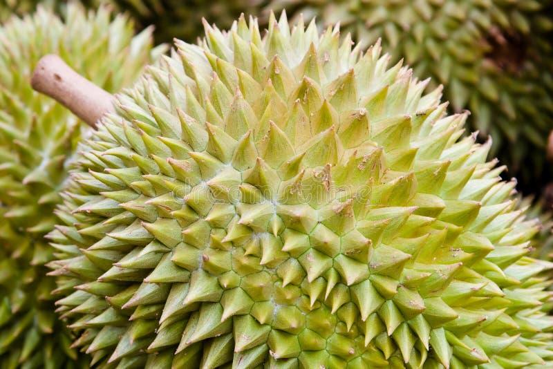 durianfrukt arkivbild