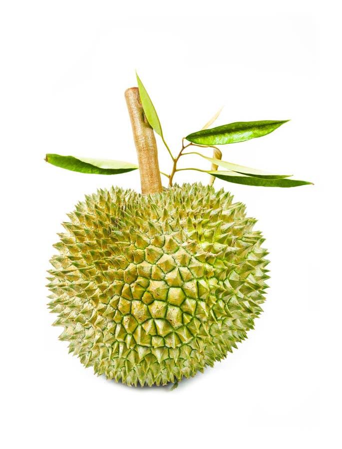 Durianfrukt och gröna sidor arkivfoto
