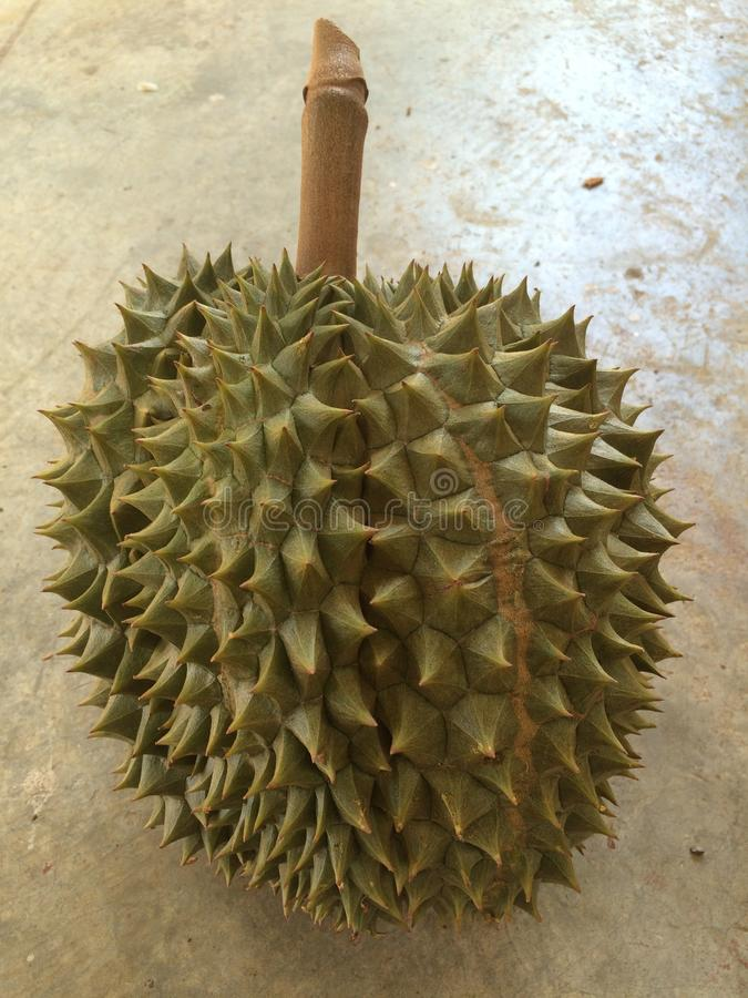 durianfruktodling fotografering för bildbyråer