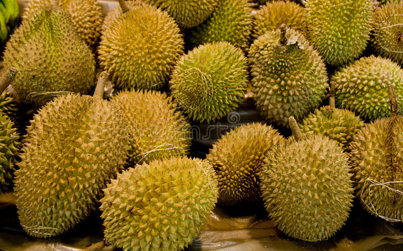 Download Durians stock photo. Image of fruits, several, nutrition - 20900132