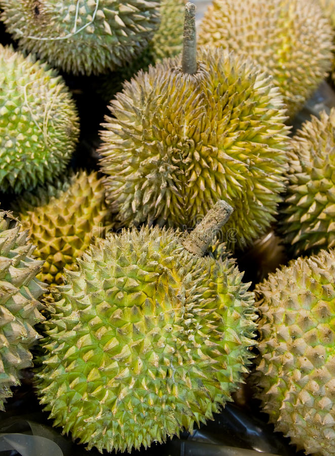 Durians. Close-up of several durians royalty free stock image