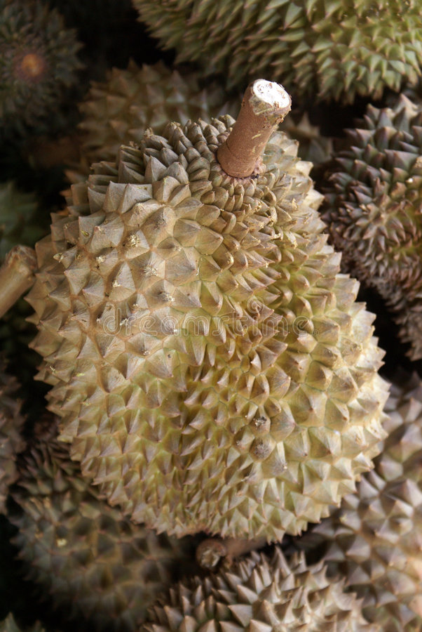 Durians photographie stock
