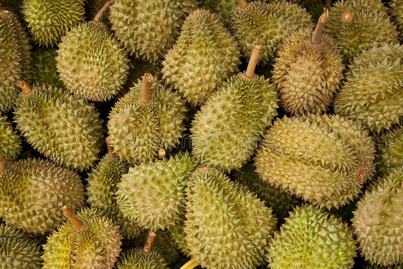 Durians. Alot of Durians from Janthaburi ,Thailand stock photos