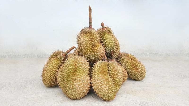 Durians delicious fruits in thailand. This is durians delicious fruits in thailand stock images