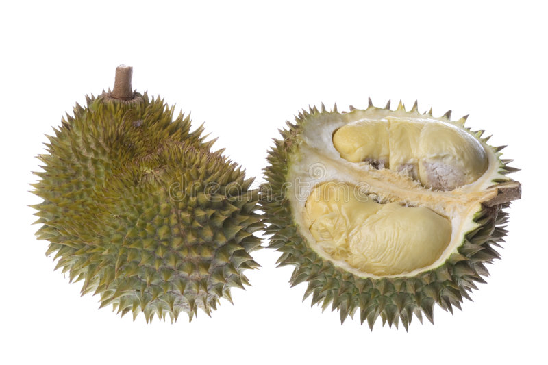 Durians Isolated. Isolated image of Durians, the King of Fruits royalty free stock photos