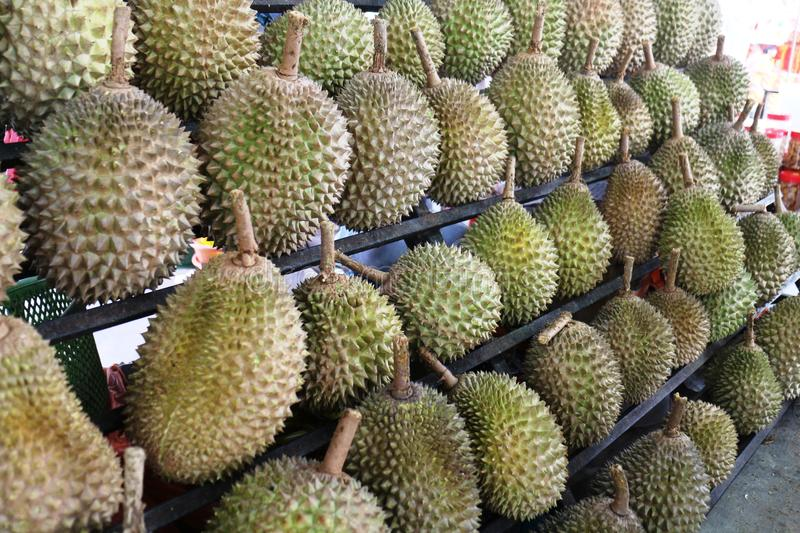 Durians King of Fruits. In malaysia stock photography