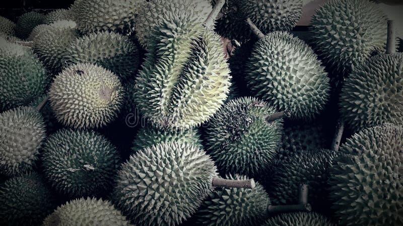Durians fotografia de stock royalty free