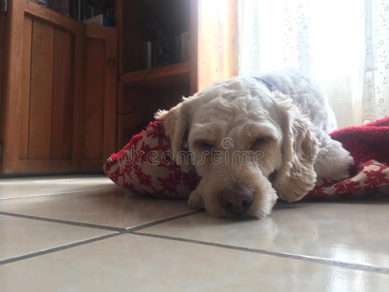 Durmiendo Niko στοκ εικόνα