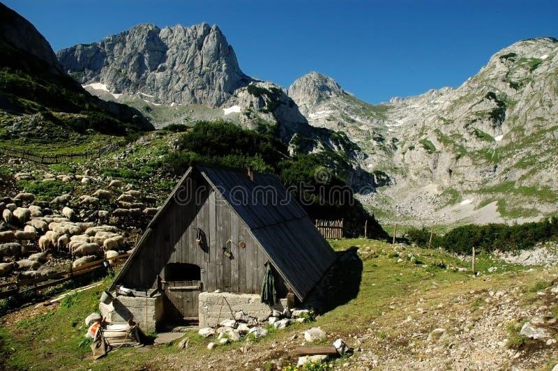 Durmitor National Park, Montenegro royalty free stock image