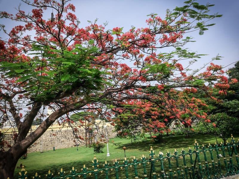 Duschar av blomman fotografering för bildbyråer