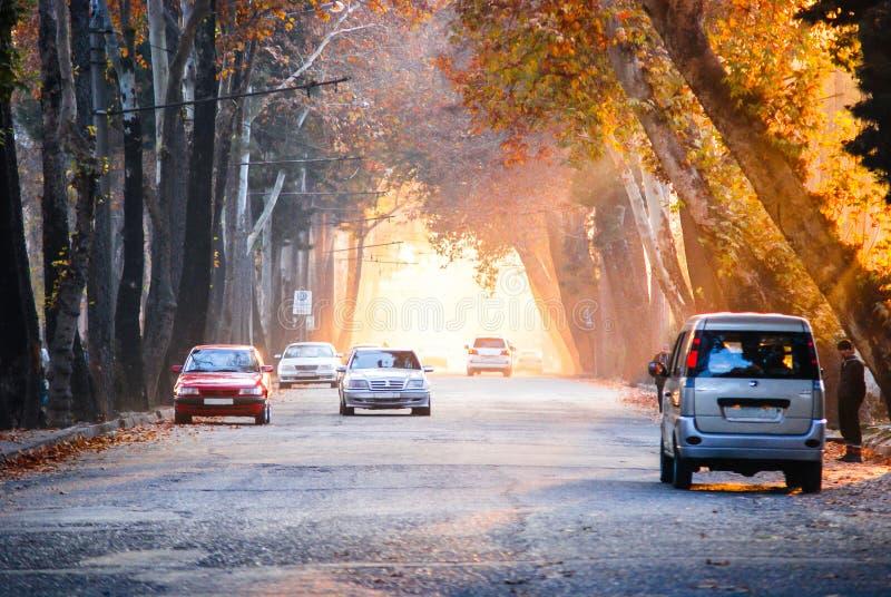 Dushanbestraat in de de herfstavond De bomen langs de weg vormen een tunnel met hun kronen stock fotografie