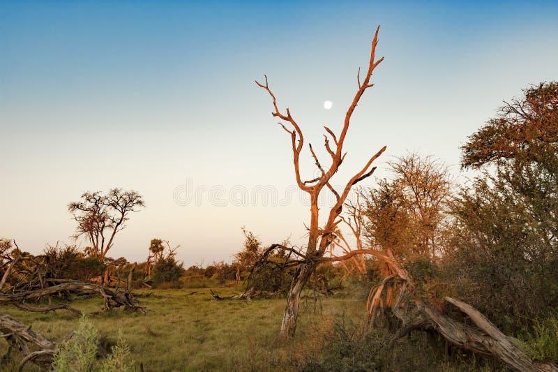 Dusk at beautiful landscape Okavango Delta royalty free stock photography