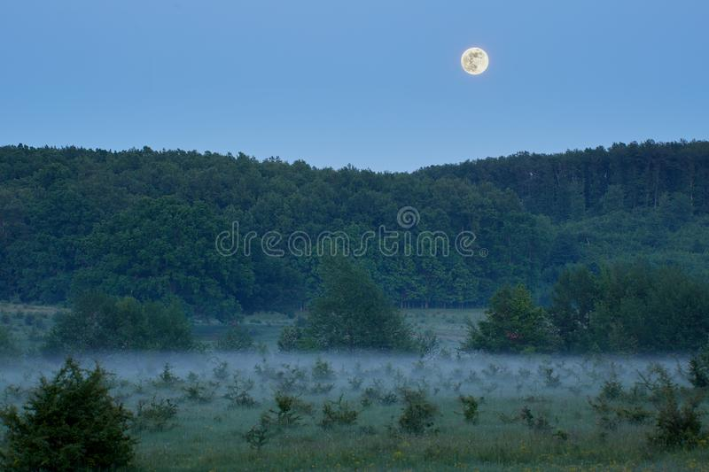 After dusk in the forest. Moon rise after dusk in the misty forest stock images