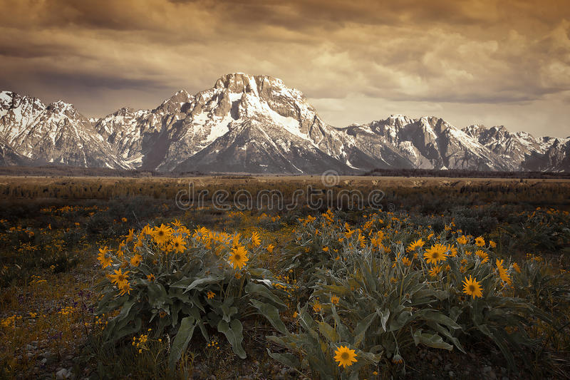 Dusk at the Grand Tetons. National Park with yellow wildflowers stock image