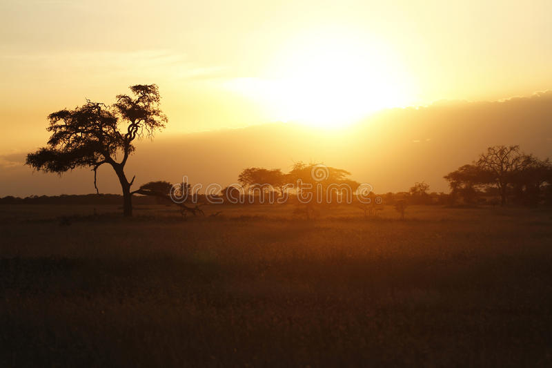 Download Dusk Light II stock photo. Image of african, light, glow - 24531112