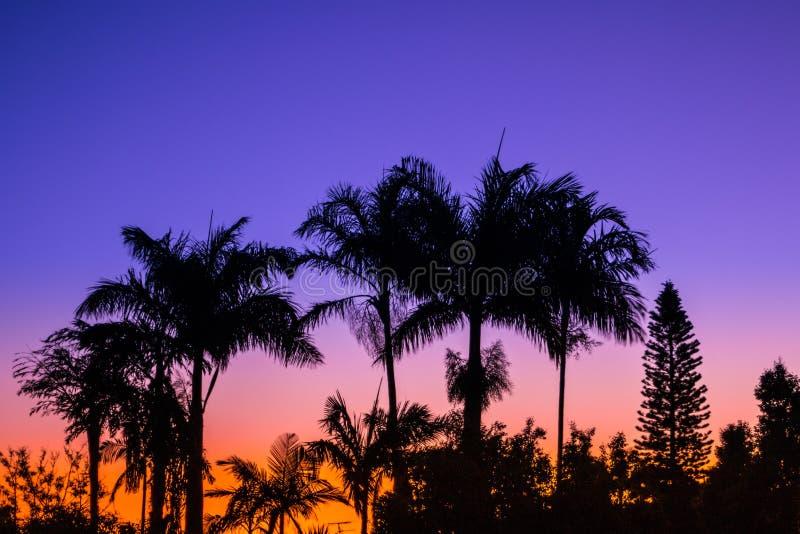 Dusk Palms 5 stock photo