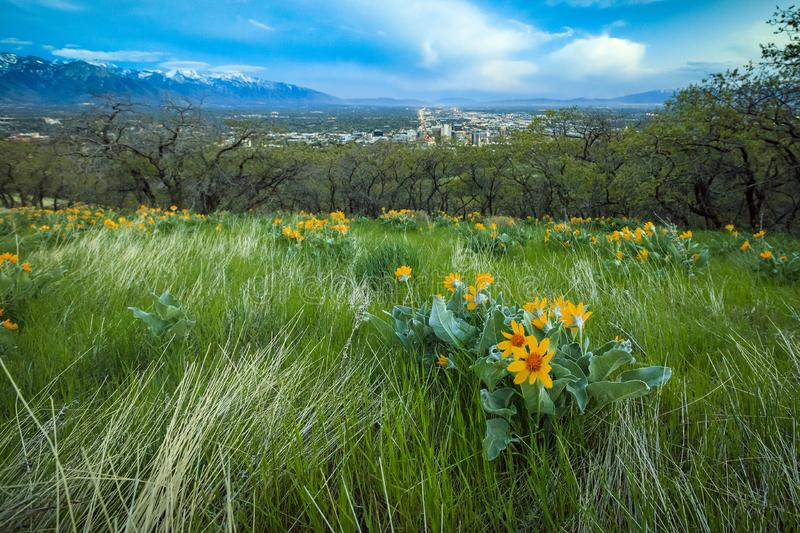 Dusk scene with widlfowers above Salt Lake City, in rural Utah, USA. royalty free stock photos