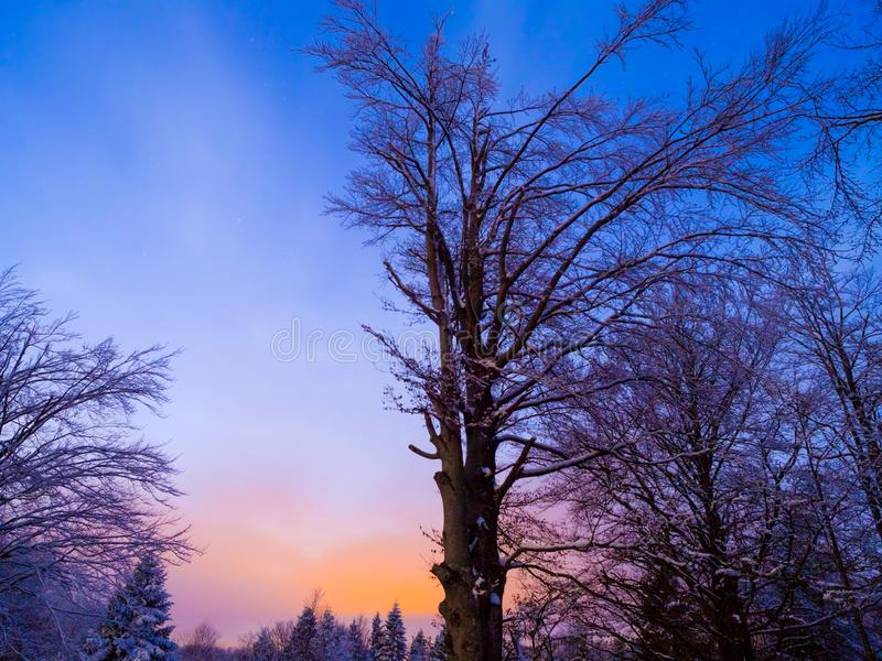 Dusk scenic trees silhouetting stock photography