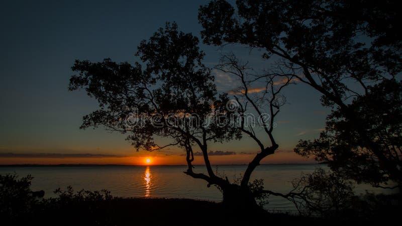 Download Dusk Sunset stock photo. Image of mangroves, wellingtonpoint - 60085760