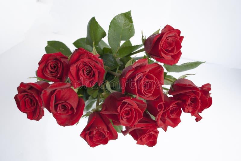 Dussin av mörker - röda rosor royaltyfria foton
