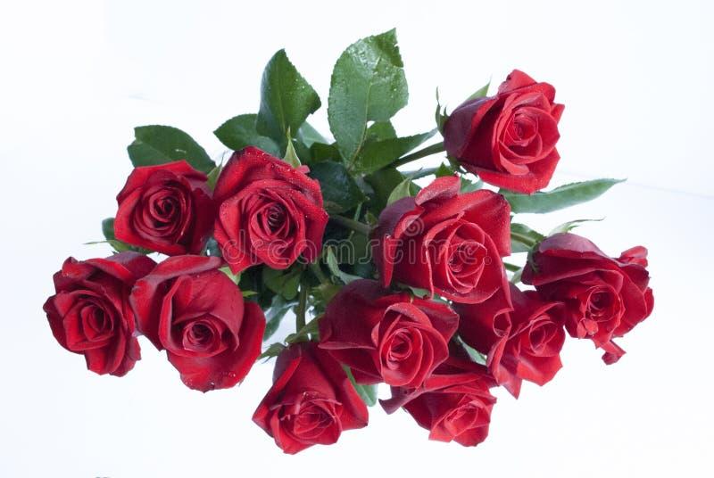 Dussin av röda rosor som isoleras på vit royaltyfria bilder