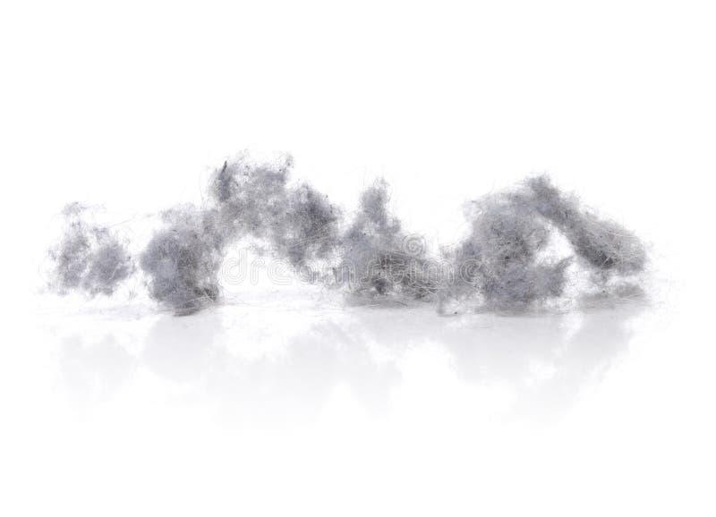 Dust bunnies stock image