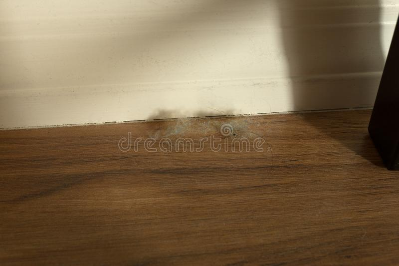 Dust bunny ball on wooden floor against wall in evening light royalty free stock photo