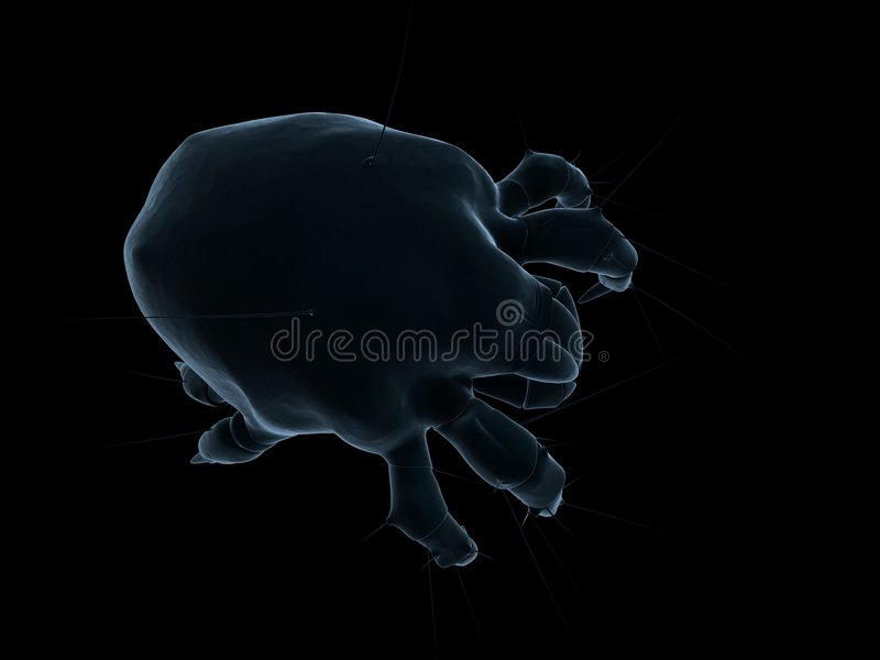 Download Dust mite stock illustration. Image of dirty, marco, acarine - 5563371