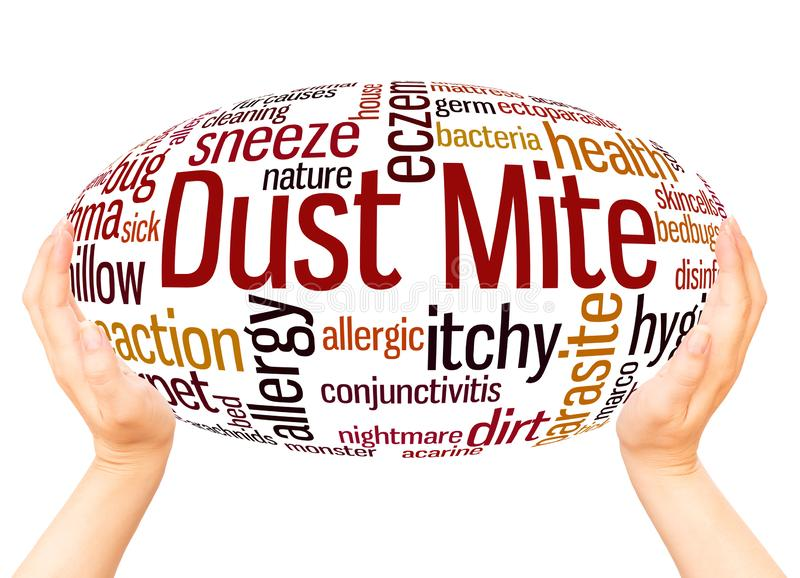 Dust mite word cloud hand sphere concept stock photography